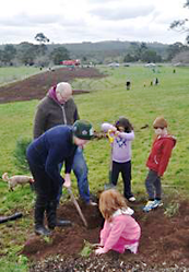 tree planting on Mt Innes